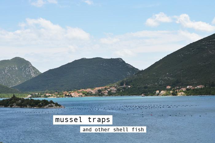 mussel traps croatia