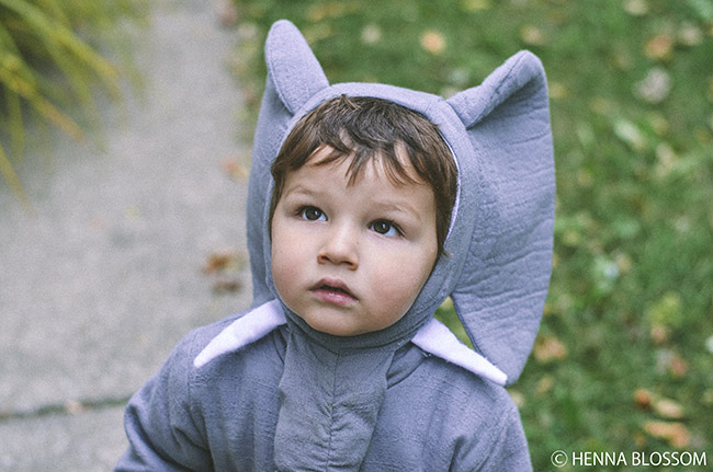 toddler halloween photos for a baby elephant